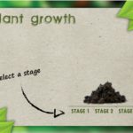 Nature-Style Articulate Storyline Template
