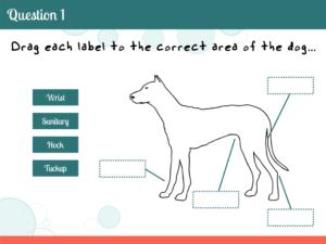 Tim Slade's eLearning Portfolio | PetSmart Dog Anatomy eLearning | Custom eLearning Development & Design